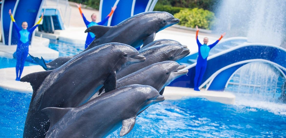 KGS DolphinDays Attraction tickets