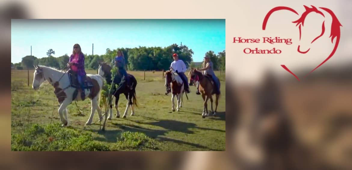 Horse Riding Orlando Kgs Kissimmee Guest Services