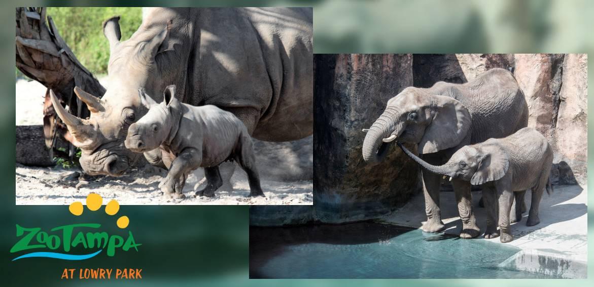 Zoo Tampa 06