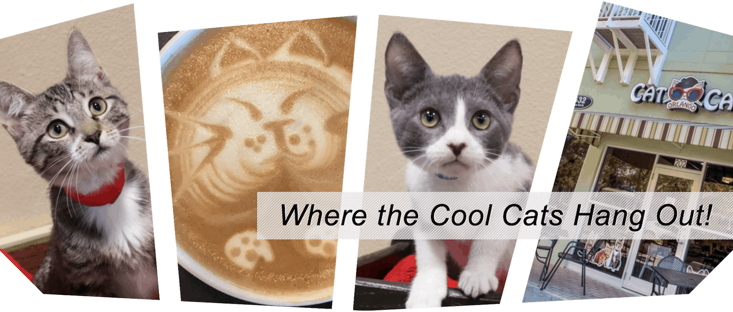 Orlando-Cat-Cafe-KGS-kissimmee-guest-services