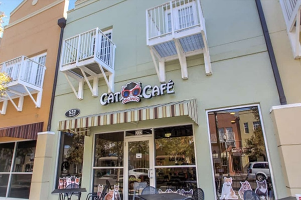 _kgs-menu-feature-catcafe